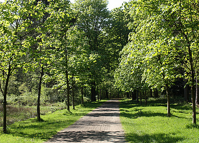 Schlosspark Rastede