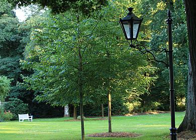 Lichtung im Palaisgarten